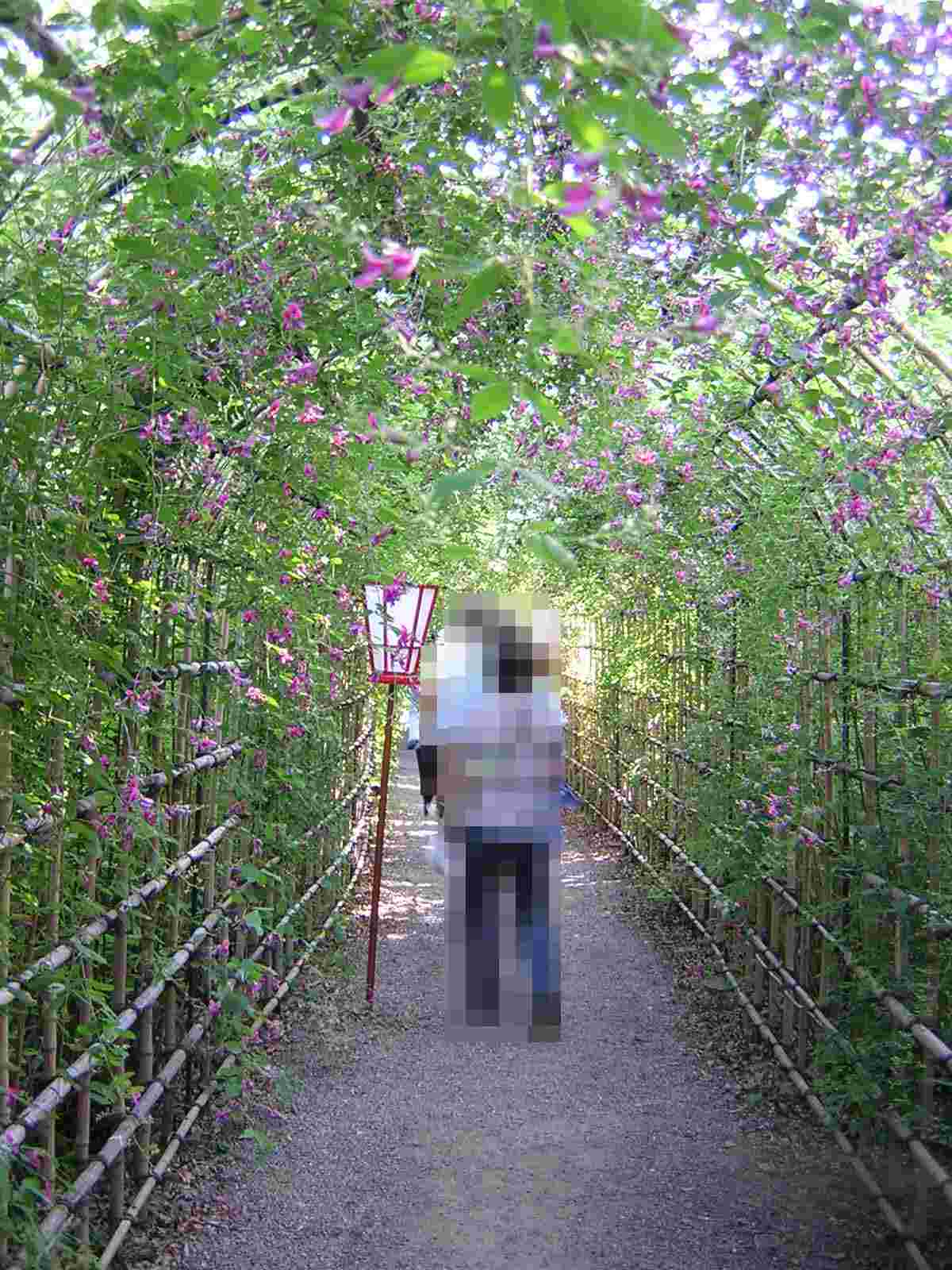 萩のトンネル