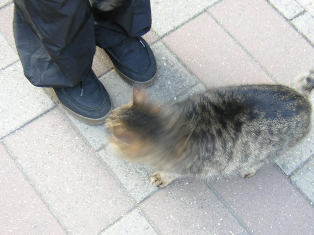 清澄庭園近くの猫