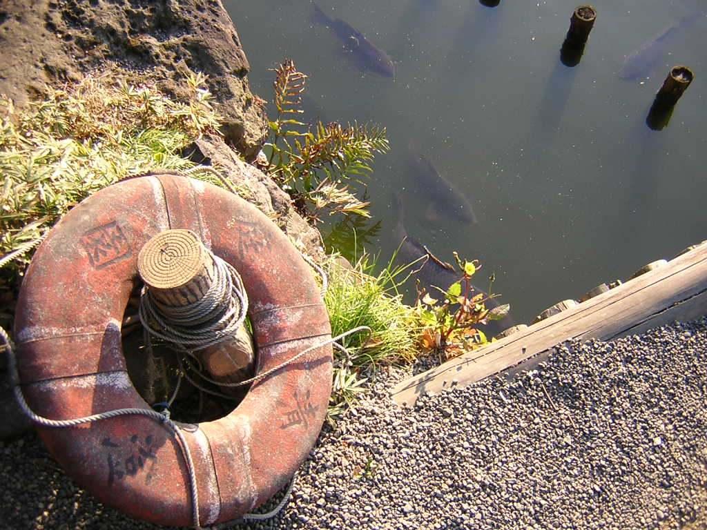 清澄庭園の浮き輪