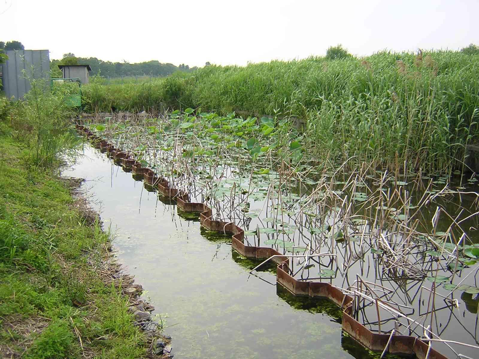 水元公園のかえるの鳴く池