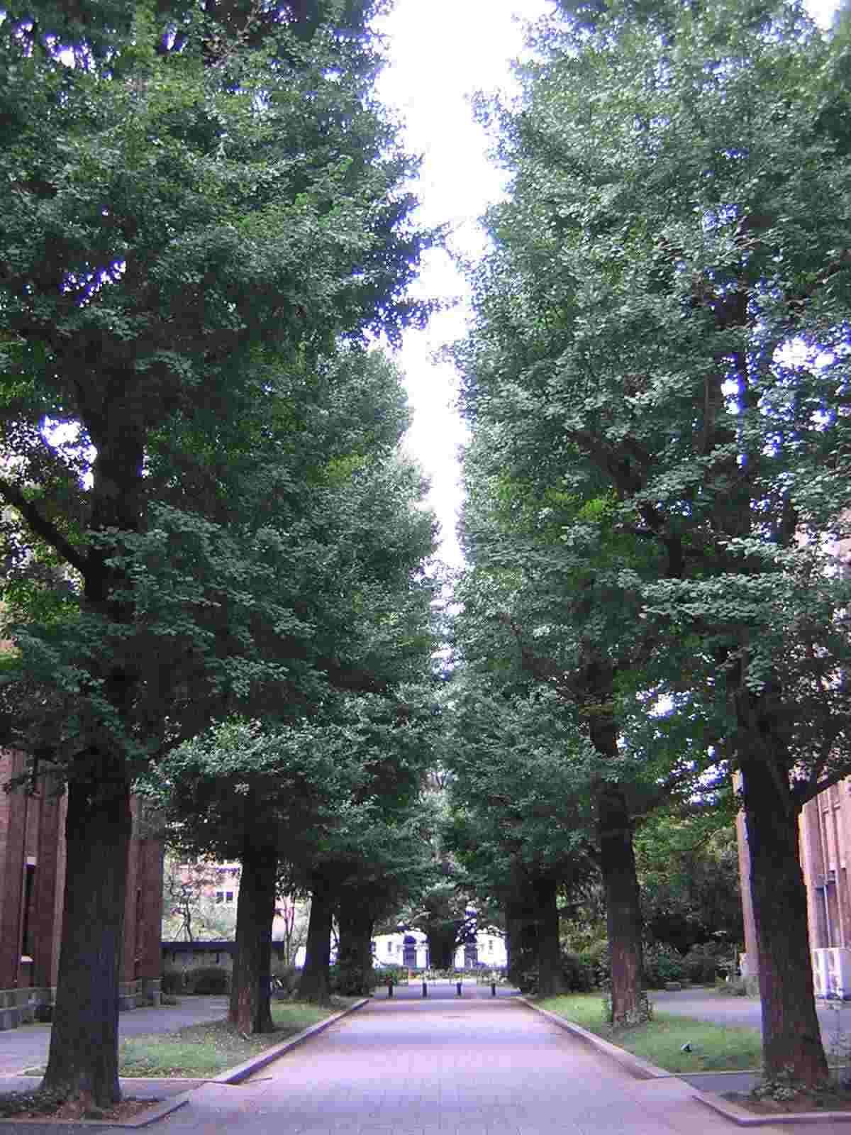東京大学の並木