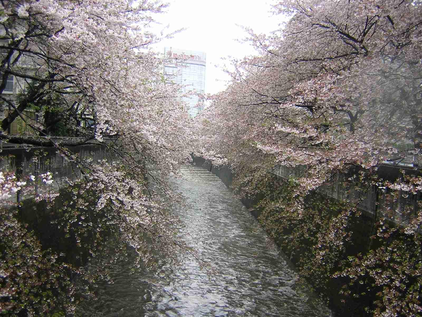 きれいな神田川