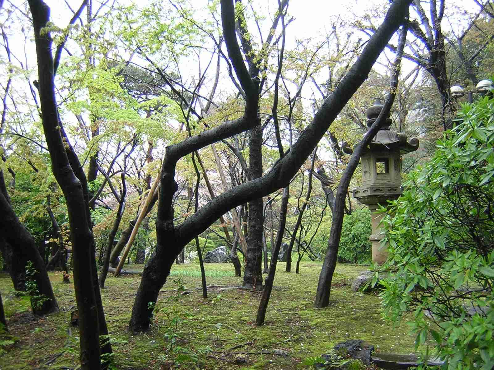 雨の日は休みな大隈庭園