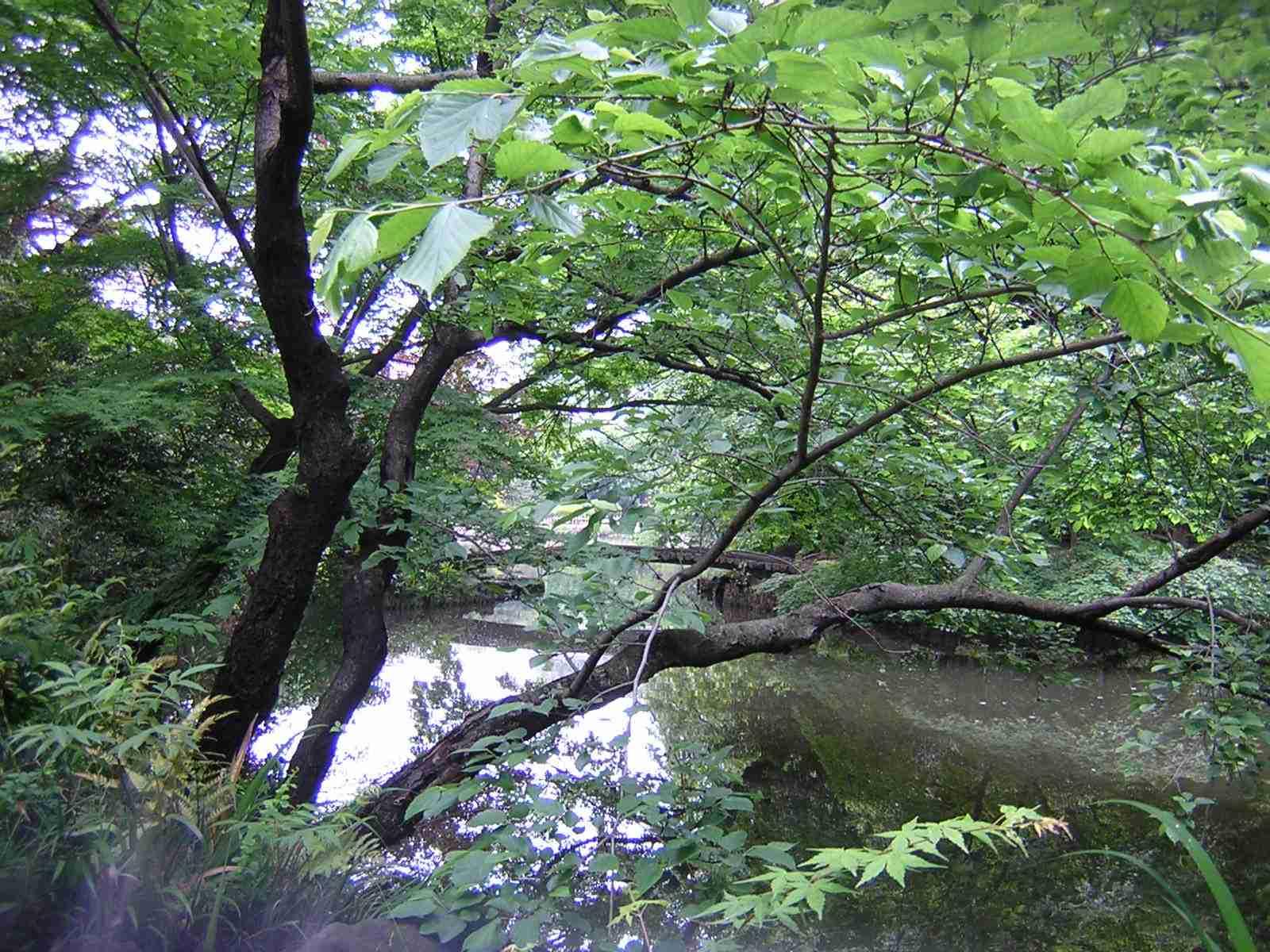 新江戸川公園の池