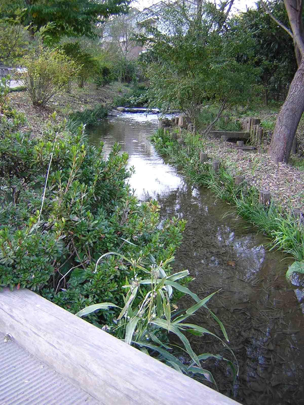 国分寺崖線付近の小川