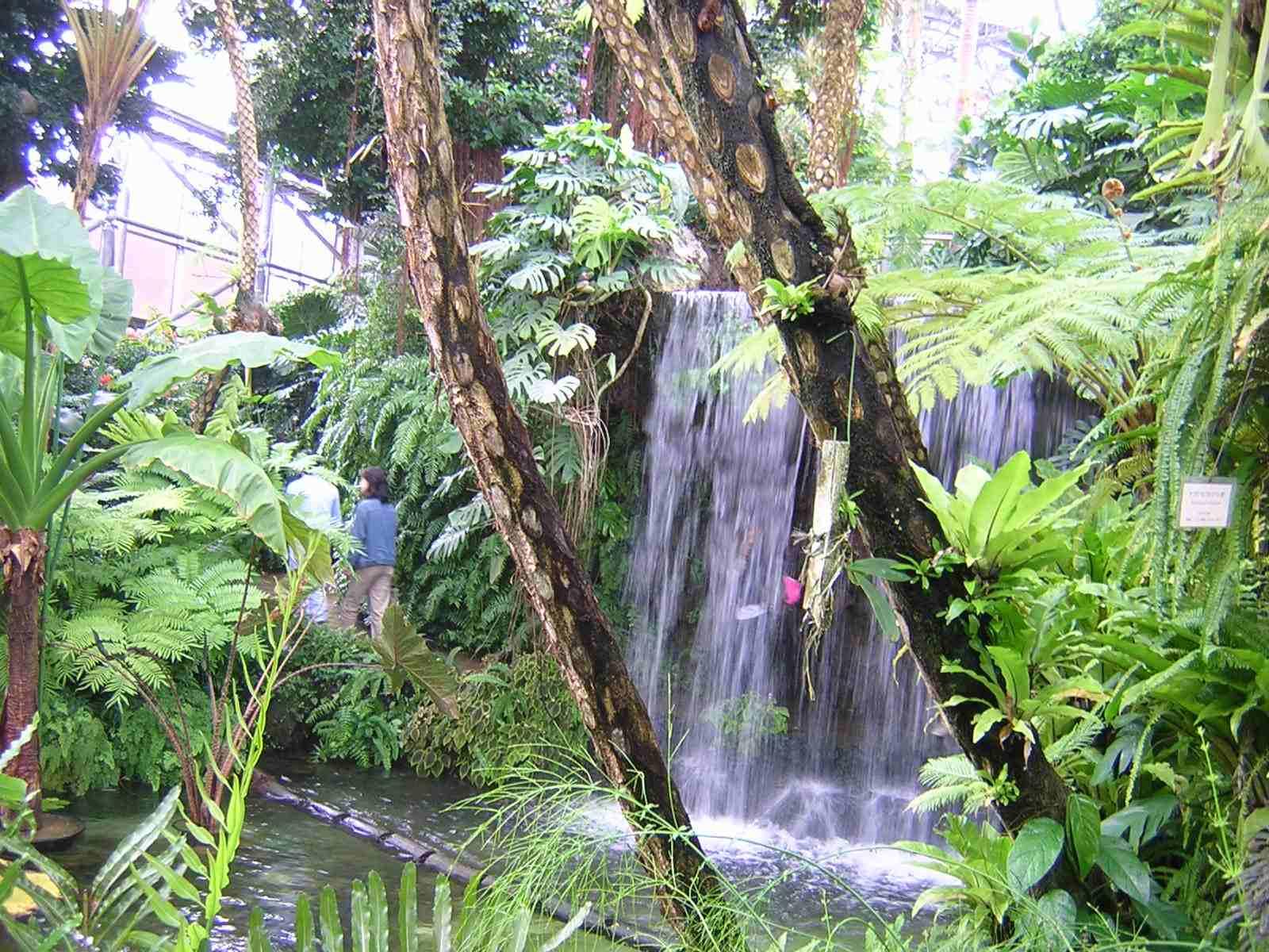 夢の島熱帯植物館の滝